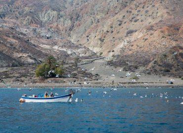 Cedros Island – Las Palmitas