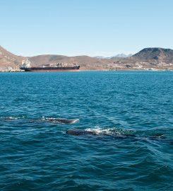 La Paz – Mid Channel Anchorage